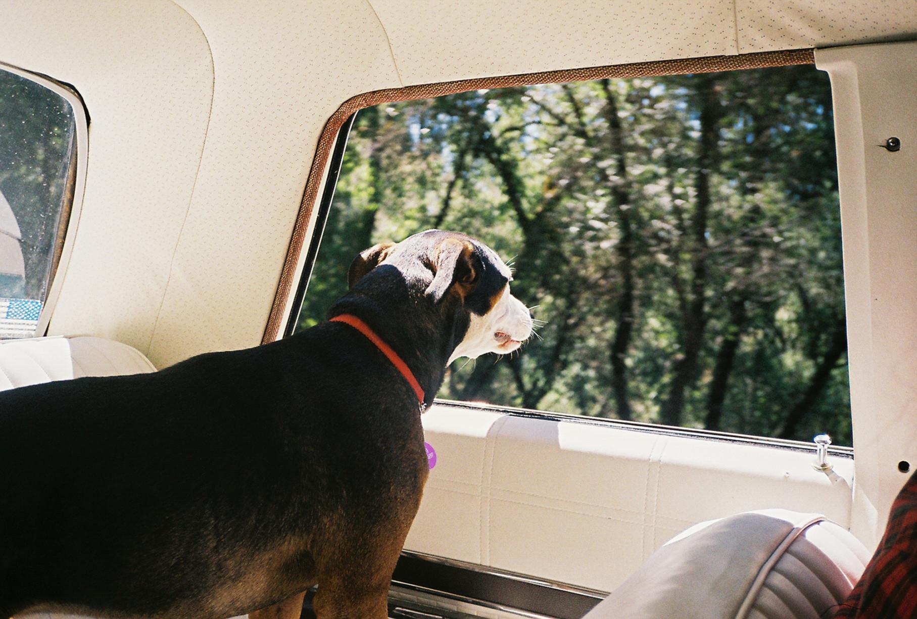 simonweller-california-dog
