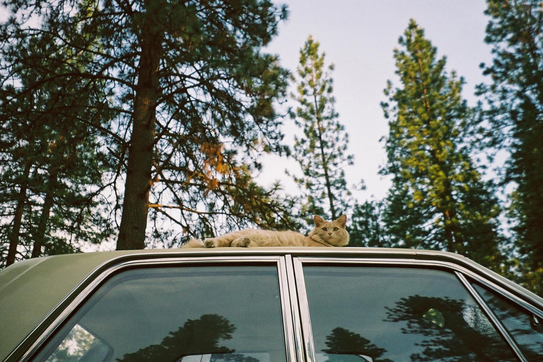 simonweller-california-plymouthcat