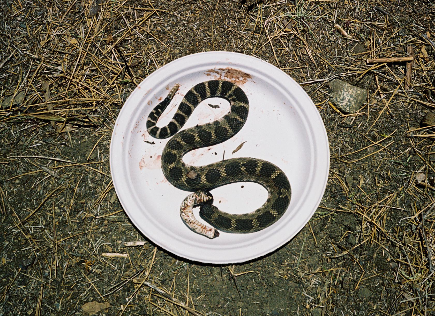 simonweller-california-snakes