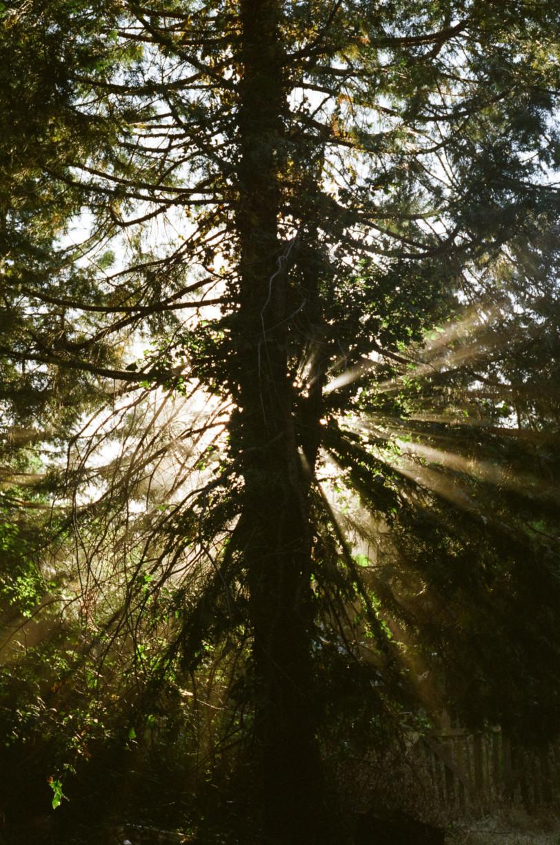 simonweller-california-trees