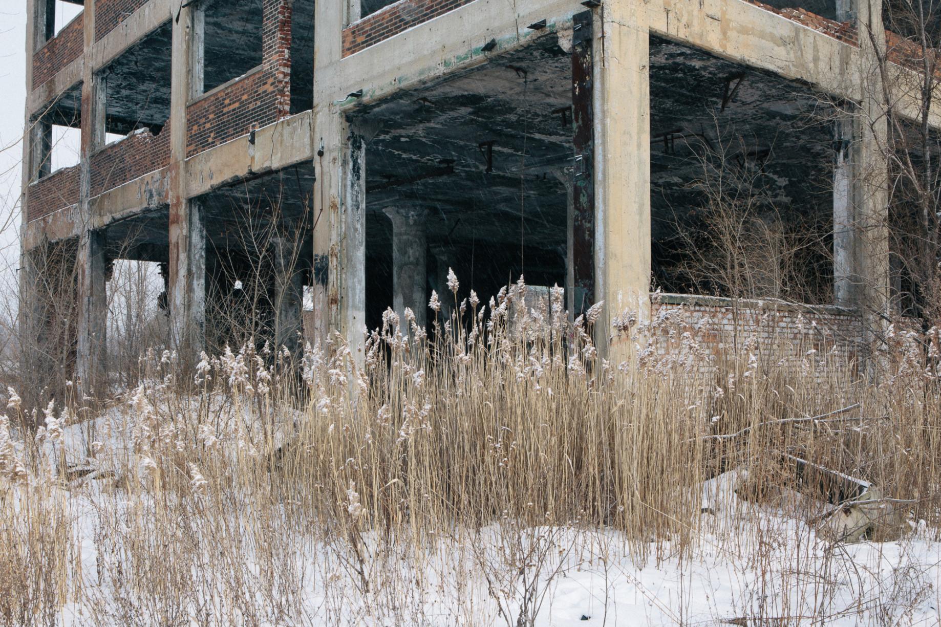 simonweller-frozenstates-grass
