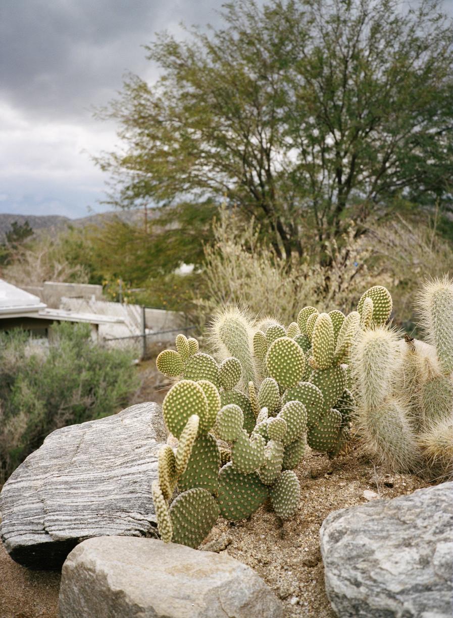 simonweller-mojave-cacti