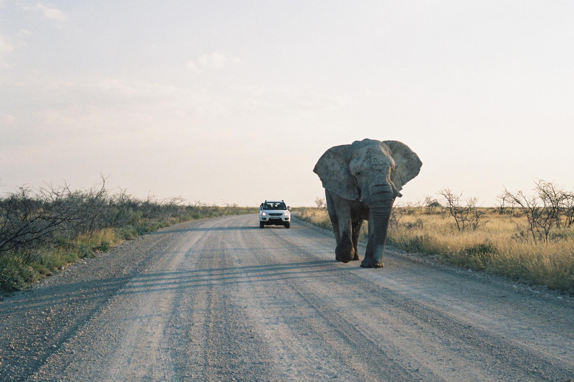 simonweller-overview-namibiaelephant