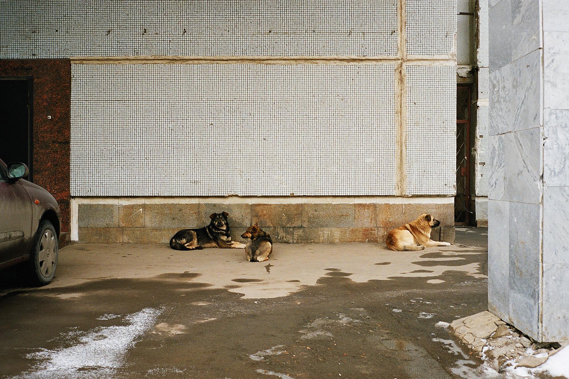 simonweller-russia-dogs