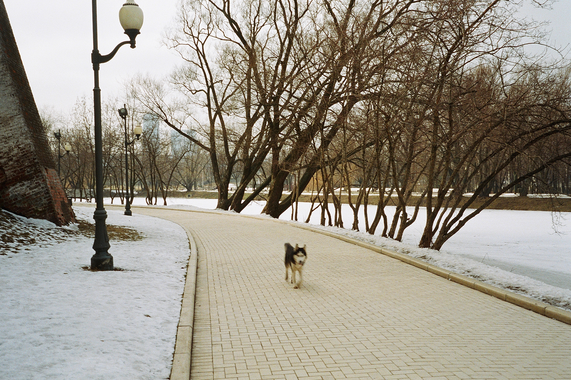 simonweller-russia-wolf