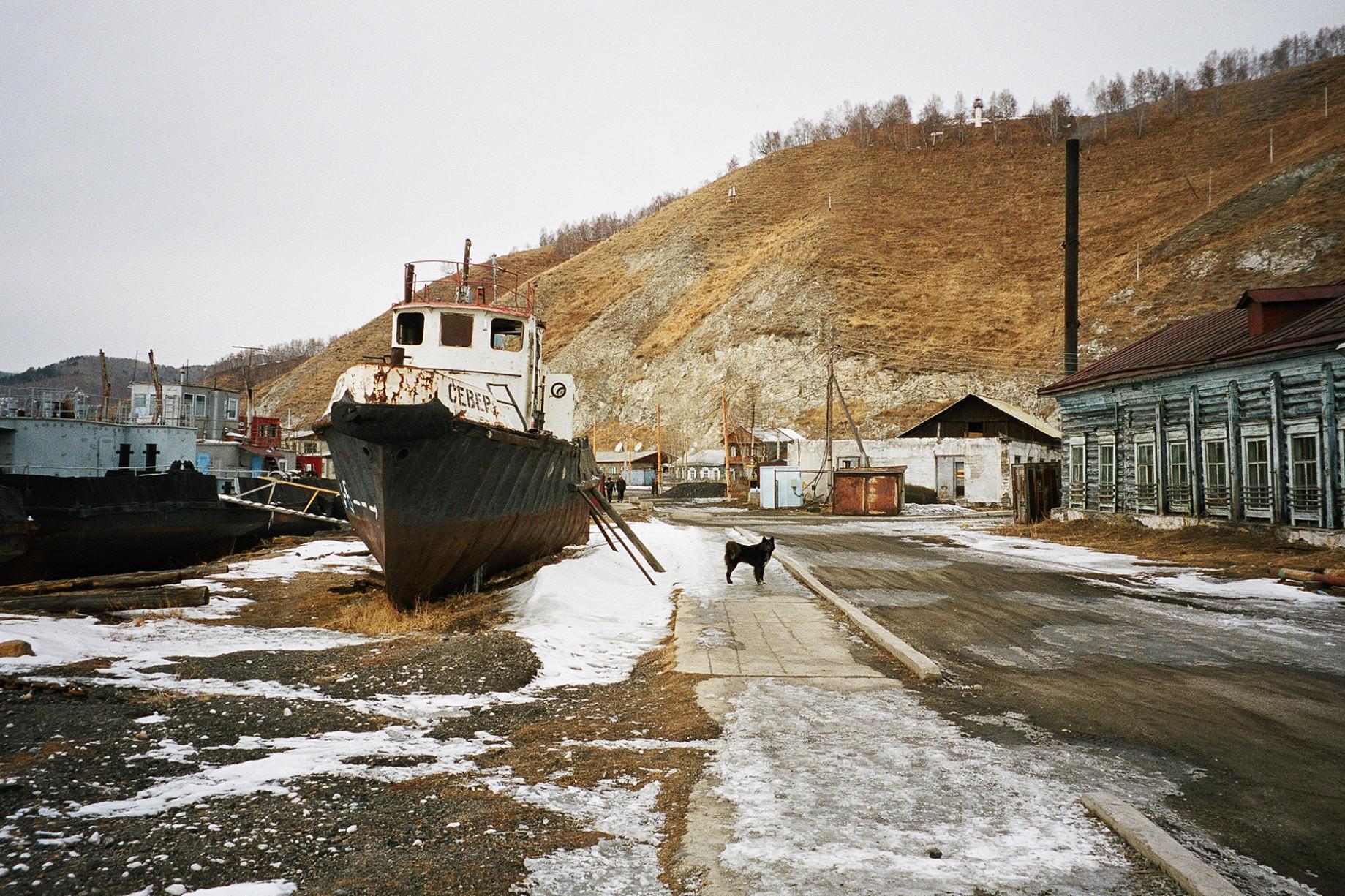 simonweller-siberia-dog