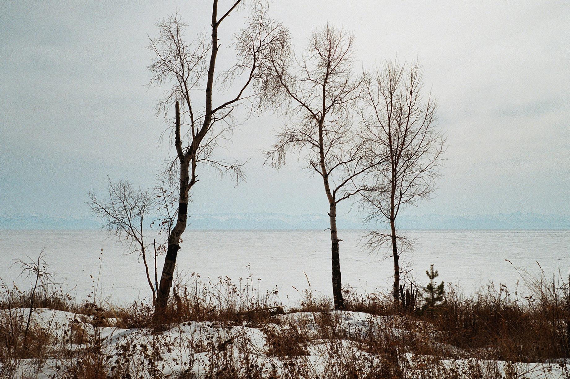 simonweller-siberia-trees